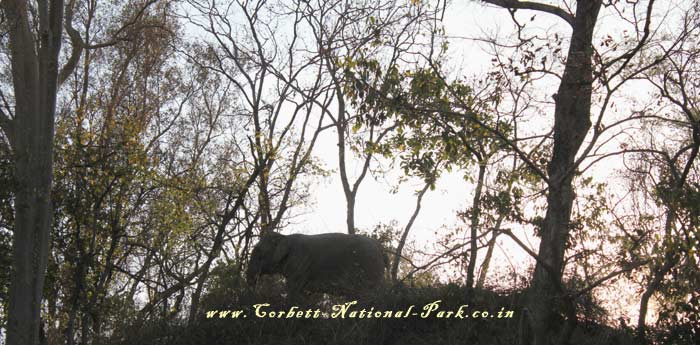 Corbett National Park - Elephant Photo Gallery