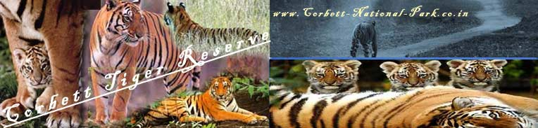 corbett national park tiger photos