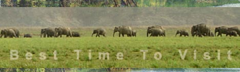 BEST TIME TO VISIT: JIM CORBETT NATIONAL PARK