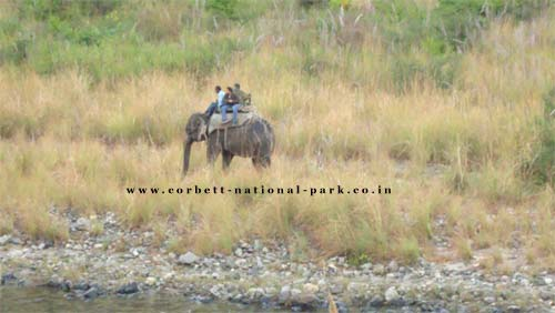Wild Life Safari at Corbett National Park | Jeep Safari at Corbett National Park | Elephant Safari at Corbett National Park |