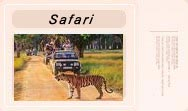 Safari In Corbett National Park.