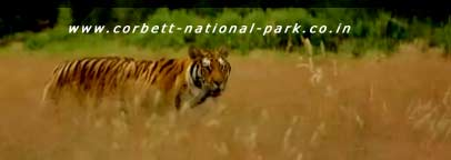 Do's and Don'ts in the Corbett National Park