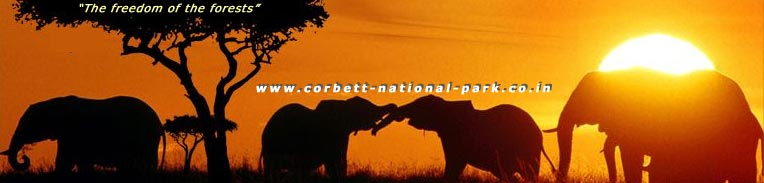 JIM CORBETT NATIONAL PARK : OTHER LINKS | FAVOURITE LINKS | PARTNER LINKS